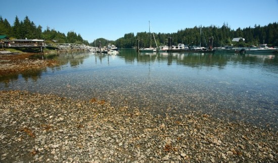 L - Canada - Bamfield - low tide & harbour
