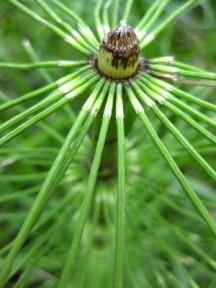 N - Canada - nature pattern bambu-like, Juan de Fuca Trail