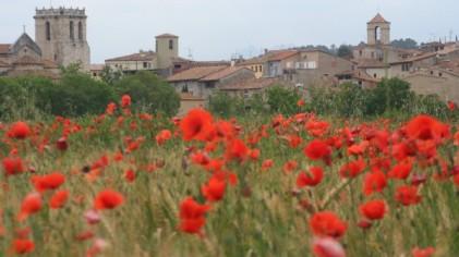 L - Spain - Field of poppies, Besalu, Catalunya