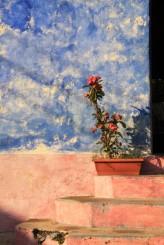Frida's Flowers Flores
