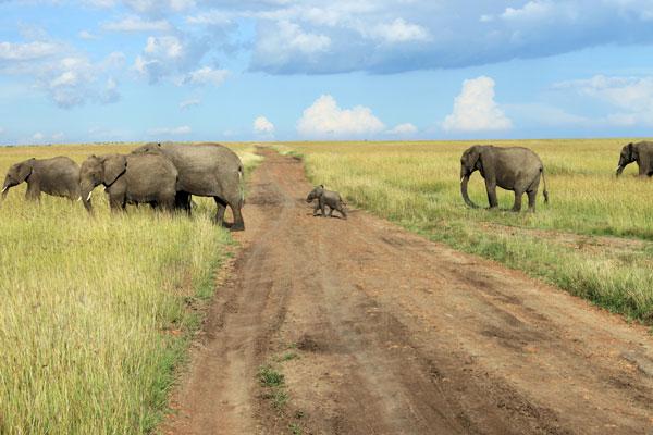 Wait for me! Masai Mara