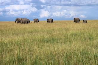On the Masai plain