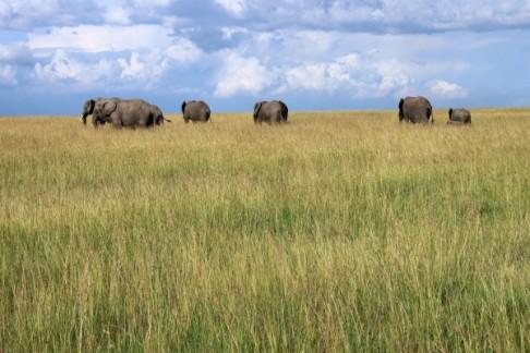 On the Masai plan
