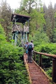 Brown Bear walkway & viewing platform, Pack Creek