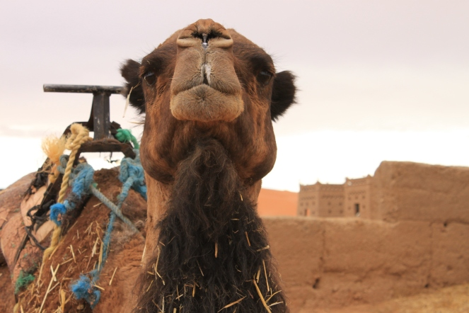 Llamada Camp, Morocco