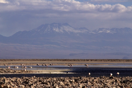 Salar de Atacama - flamingoes with the distant volcanic Andes