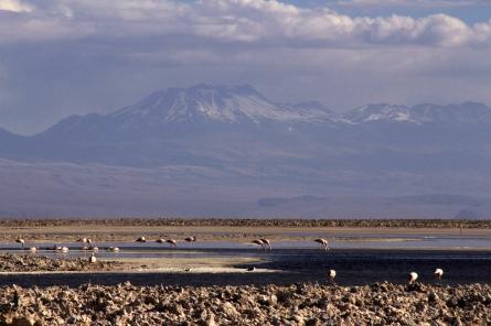 Salar de Atacama - flamingoes with the distant volcanic Andes