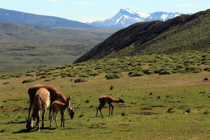 HIking Torres del Paine National Park