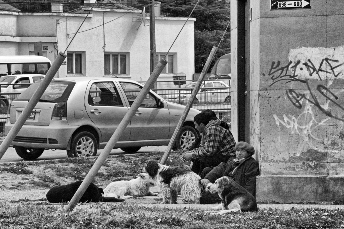 Street dogs PA