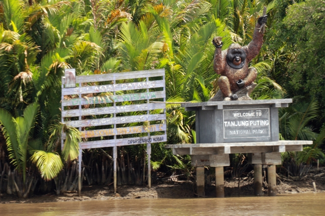 Welcome to Tanjung Puting National Park