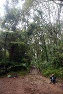 Porters, rainforest, roadway, & rescue cart