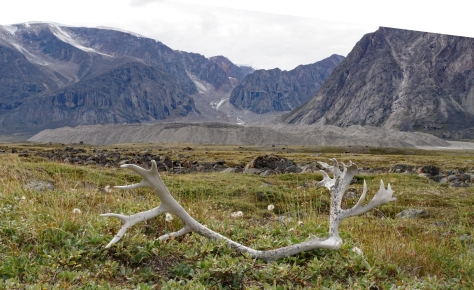 Glaciers and caribou antlers