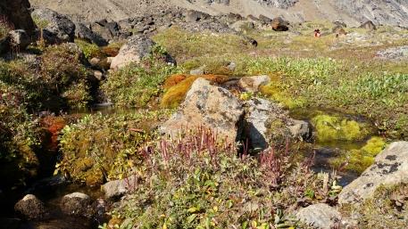 Arctic Flower Garden
